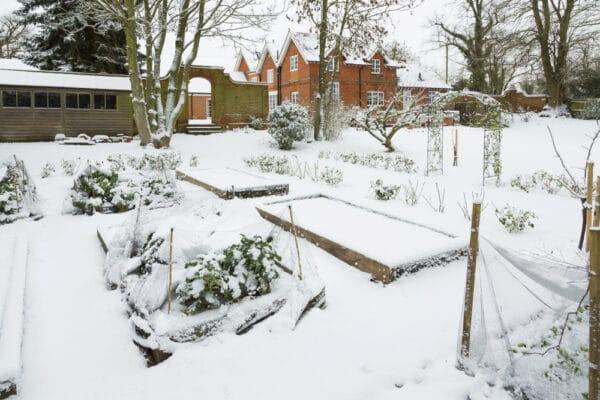 Que faire pousser en janvier dans votre potager ? Jardin en permaculture sous la neige