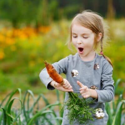 Une enfant arrachant avec enthousiasme une carotte