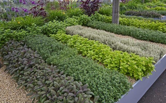 Carré potager avec des herbes aromatiques
