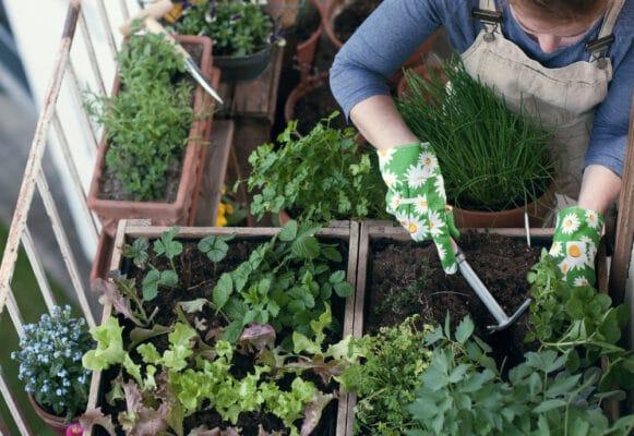 Jardin sur balcon : jeune femme jardinant avec un griffe, plantation d'herbes aromatiques