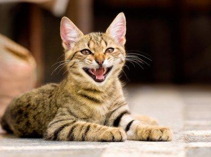 Comportement du chat : toutes nos explications pour mieux le comprendre
