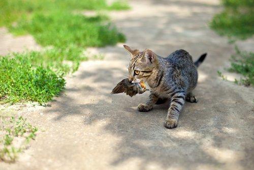 Photo of Tout comprendre sur le comportement du chat