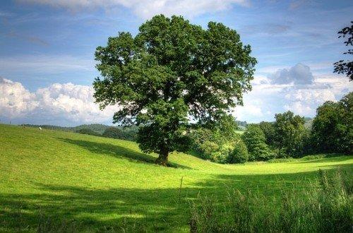 Informations sur le chêne