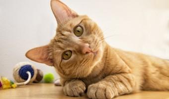 Jeux pour chats : mon compagnon aime jouer parce qu'il en a besoin