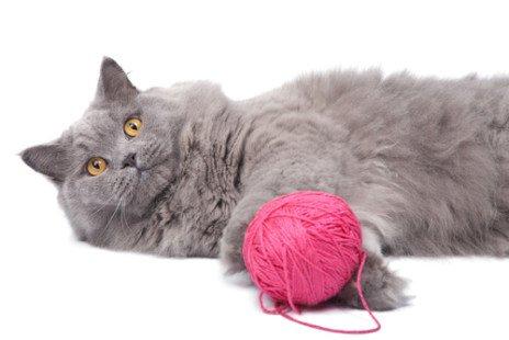 Jeux pour chats : tous nos conseils