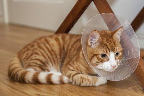 Maladies du chat : tous nos conseils