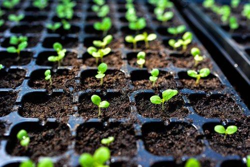 Les différentes techniques de semis