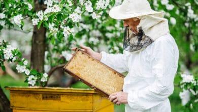 Installez une ruche