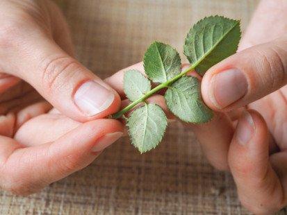 Nos conseils pour chasser naturellement les acariens de votre jardin