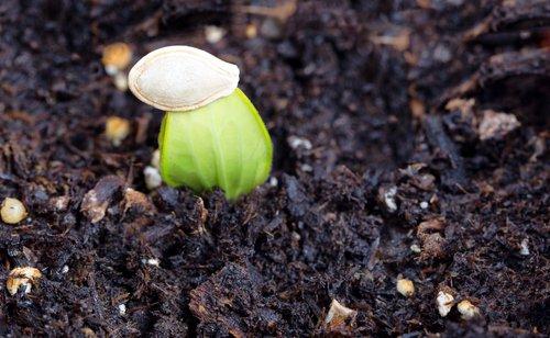 Planter des courgettes : tous nos conseils