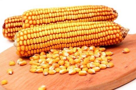 Une céréale populaire et très utilisée