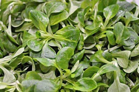 Une salade riche d'un point de vue nutritionnel