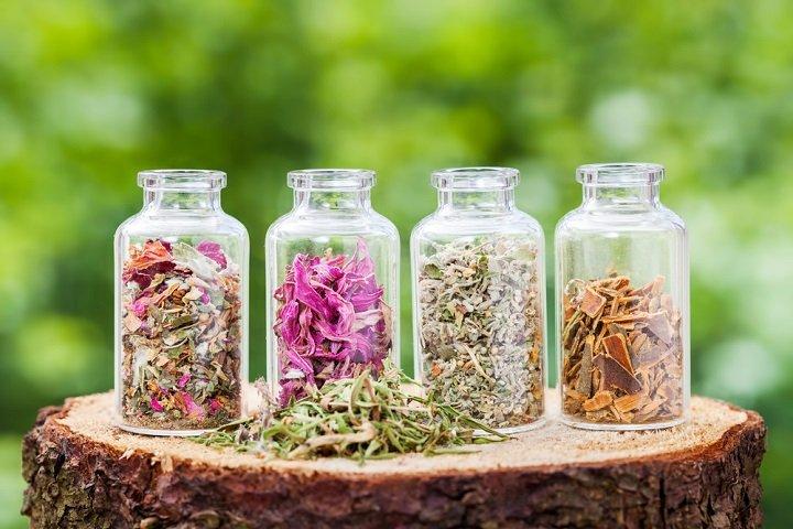 Photo of Plantes médicinales : bien les connaître pour bien les utiliser