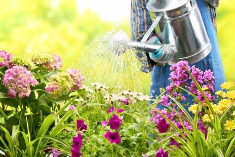 Tous nos conseils pour lutter contre la rouille au jardin