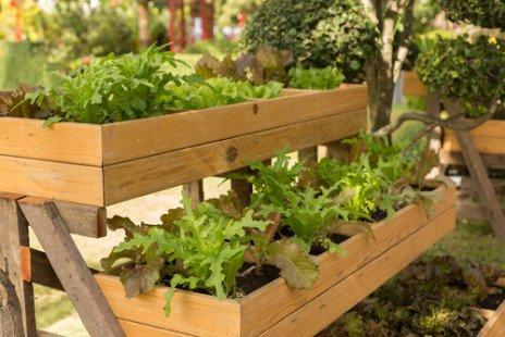 planter des salades toute l 39 ann e c 39 est possible. Black Bedroom Furniture Sets. Home Design Ideas