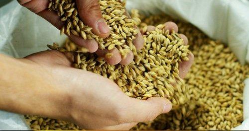 Malt d'orge : une céréale aux nombreux nutriments !