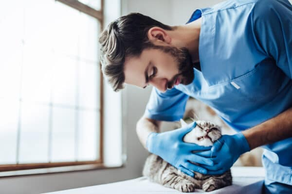 maladies du chat