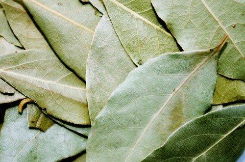 Photo of Le laurier : un aromate symbolique et aux nombreux effets