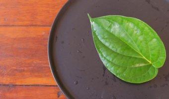 Le bétel : une plante aux nombreuses propriétés