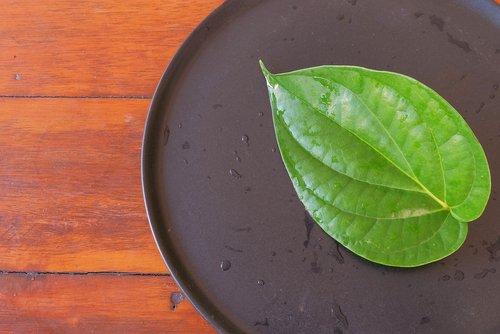 Bétel : toutes les propriétés de cette plante médicinale