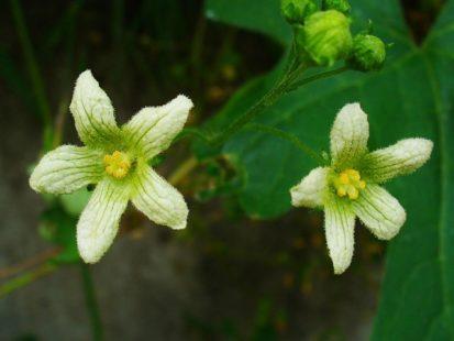 Une jolie petite fleur à manier avec précaution !