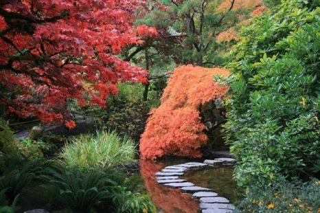 La composition d'un jardin japonais