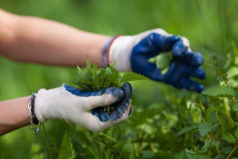 Purin d'ortie : le trésor du jardinier