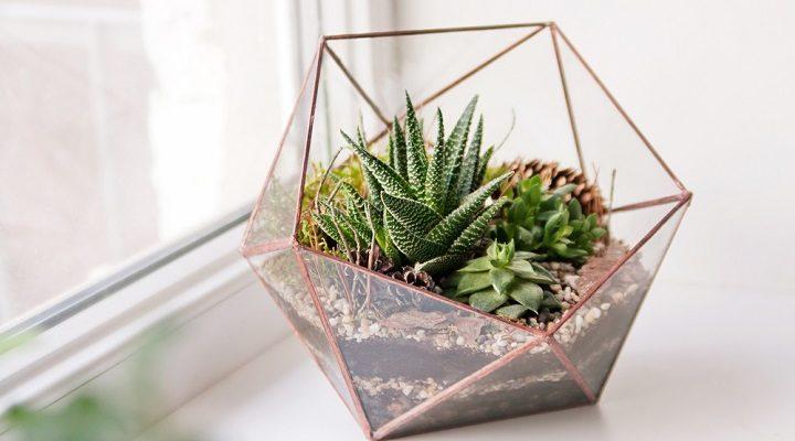 Un terrarium pour apporter une touche de vert à votre intérieur