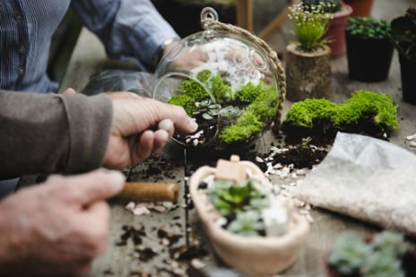 DIY : comment avoir un beau terrarium chez soi