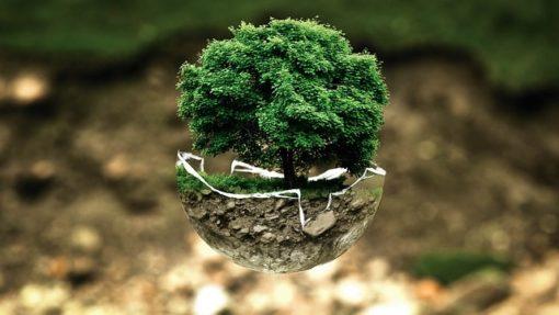Astuces pour la journée de la terre : adoptez les bons gestes !