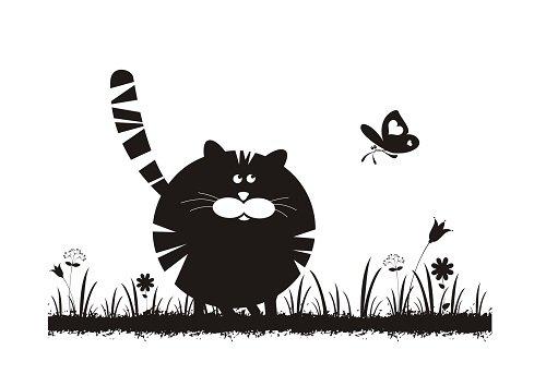 Gros chat et tellement mignon