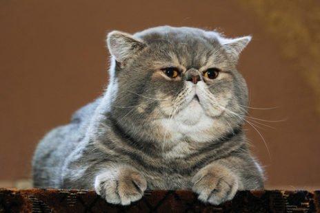 Gros chat et tellement mignon avec sa bonne bouille !