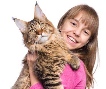 Une petite fille et son gros chat