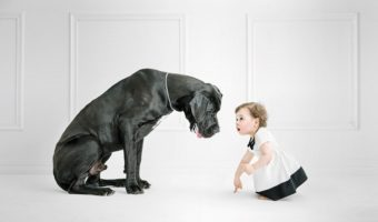 Chiens XXL : comment bien prendre son d'un gros chien ?