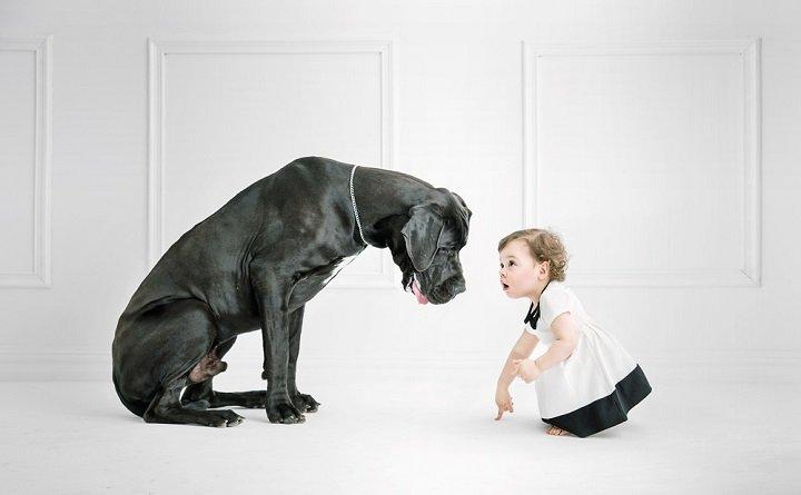 Gros chien : comment en prendre soin ?