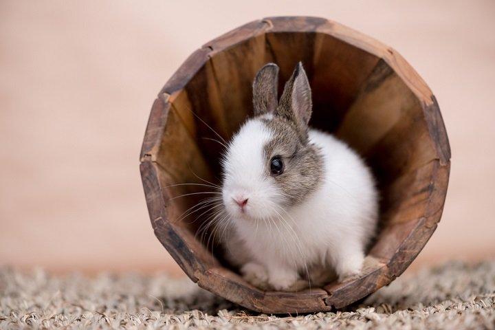 Adopter un lapin nain : tous nos conseils