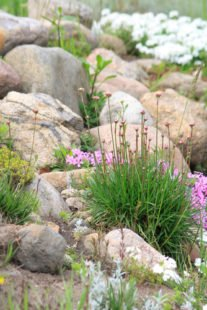La rocaille : entre pierre et végétal