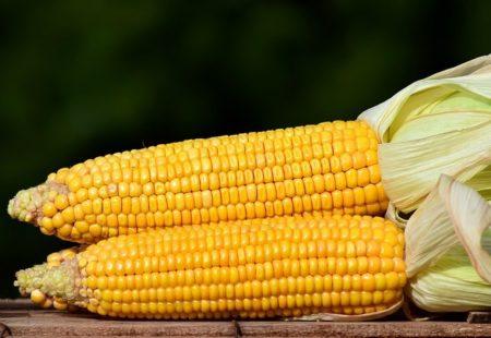 Maïzena ou facule de maïs : un aliment extrait de l'amidon de maïs