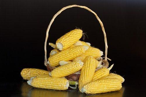 Maïzena : un aliment extrait de l'amidon de maïs
