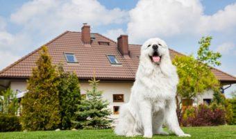 Le chiens de garde… en chair et en os