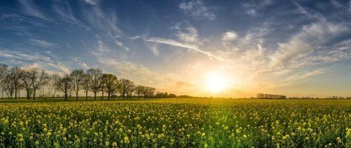 Date équinoxe de printemps : quand a t-il lieu ?
