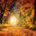 Equinoxe d'automne : tout savoir sur cet événement automnal