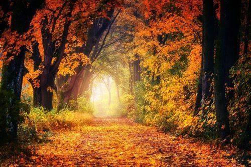 Équinoxe d'automne : la date de l'automne