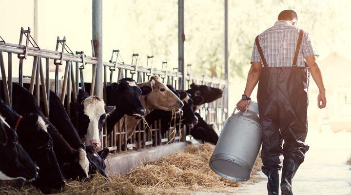 Le lait, bon ou mauvais pour la santé ?