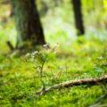 Le sous-bois : un plus pour la biodiversité