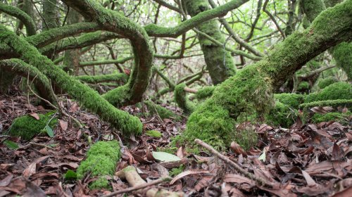 Un milieu unique qui favorise la biodiversité
