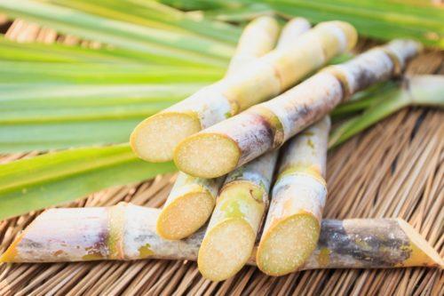 La canne à sucre : un aliment aux nombreuses facettes !