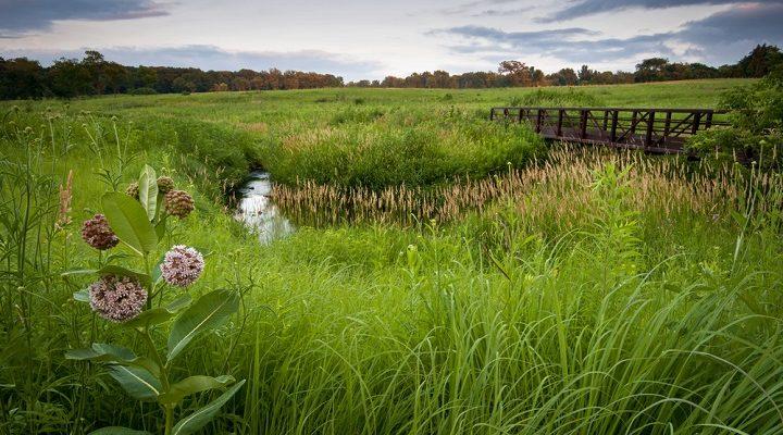 La prairie naturelle au service de la biodiversité