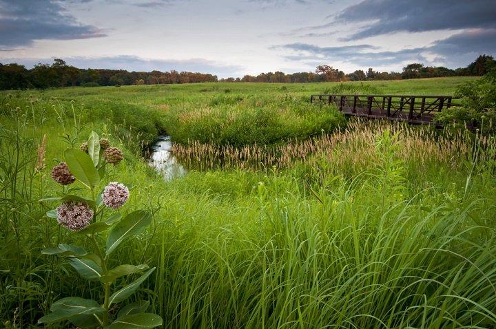 La prairie naturelle, un véritable réservoir de biodiversité
