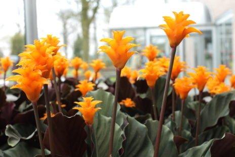 Calathea : une plante exotique facile à entretenir